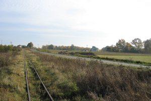 Buraki cukrowe, jeszcze kilka lat temu trafiły by do Opola Lubelskiego wagonami kolejki.