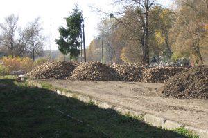 Plac składowy buraków cukrowych w Wąwolnicy.