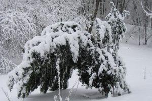Ogród Saski.