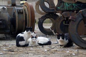 Koty służbowe warsztatów na Tramwajowej.