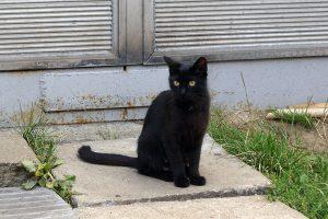 Kot służbowy na terenie Zajezdni Chocianowice.