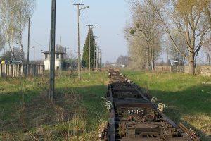 Rogów Wąskotorowy Towarowy - dużo transporterów.